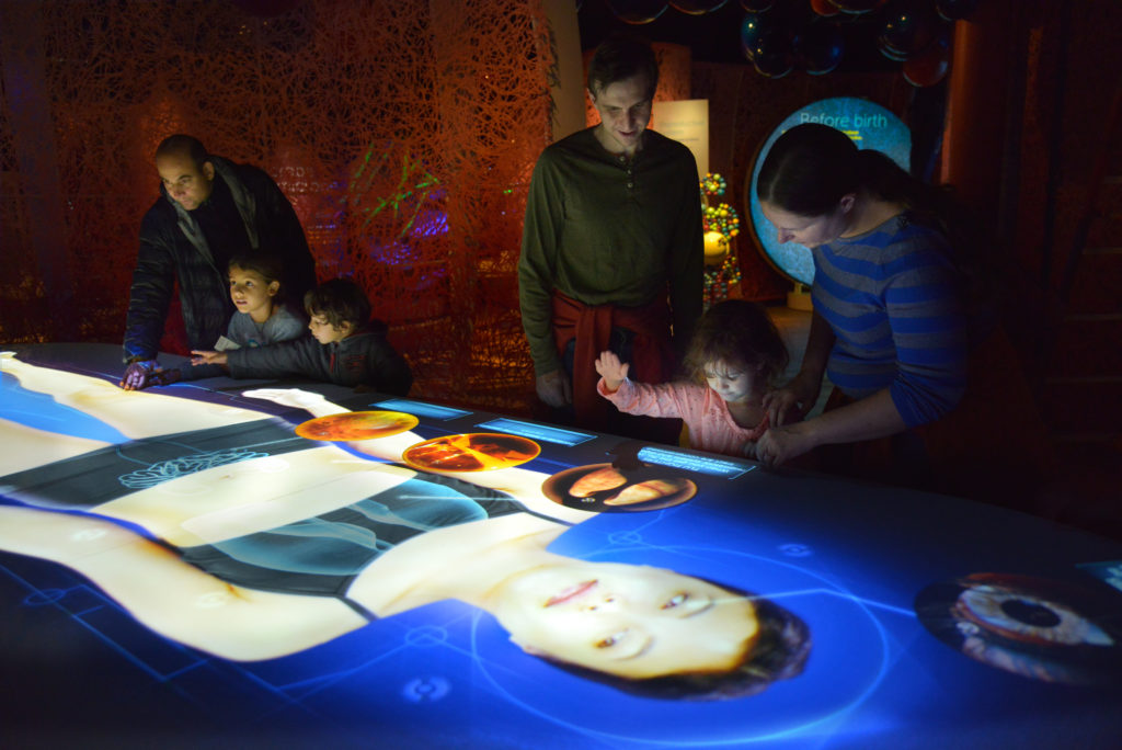 A 14-foot projection of a pregnant woman's body as part of an interactive table that highlights ways that microbes impact human health.