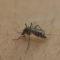 Brazil Zika Virus