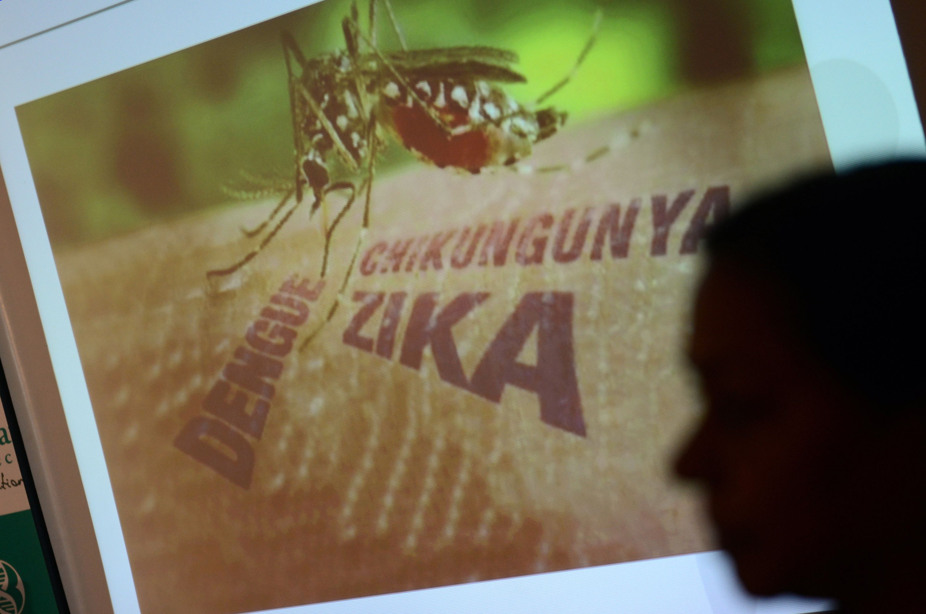 Images of a presentation on the Zika virus are seen at a press conference in Hyderabad on February 3, 2016. Vaccines and bio-therapeutic manufacturer Bharat Biotech said it was developing two candidates for vaccines for Zika infection. AFP PHOTO / Noah SEELAM / AFP / NOAH SEELAM        (Photo credit should read NOAH SEELAM/AFP/Getty Images)