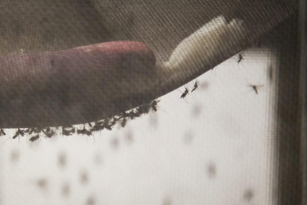 Zika CDC Dengue Branch