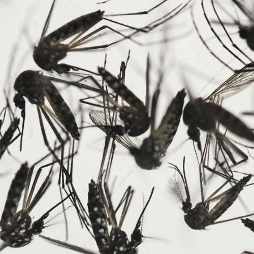 U.S. agency helps fund Takeda effort to develop Zika vaccine