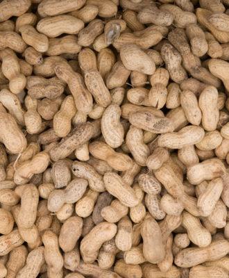 Peanuts food allergies