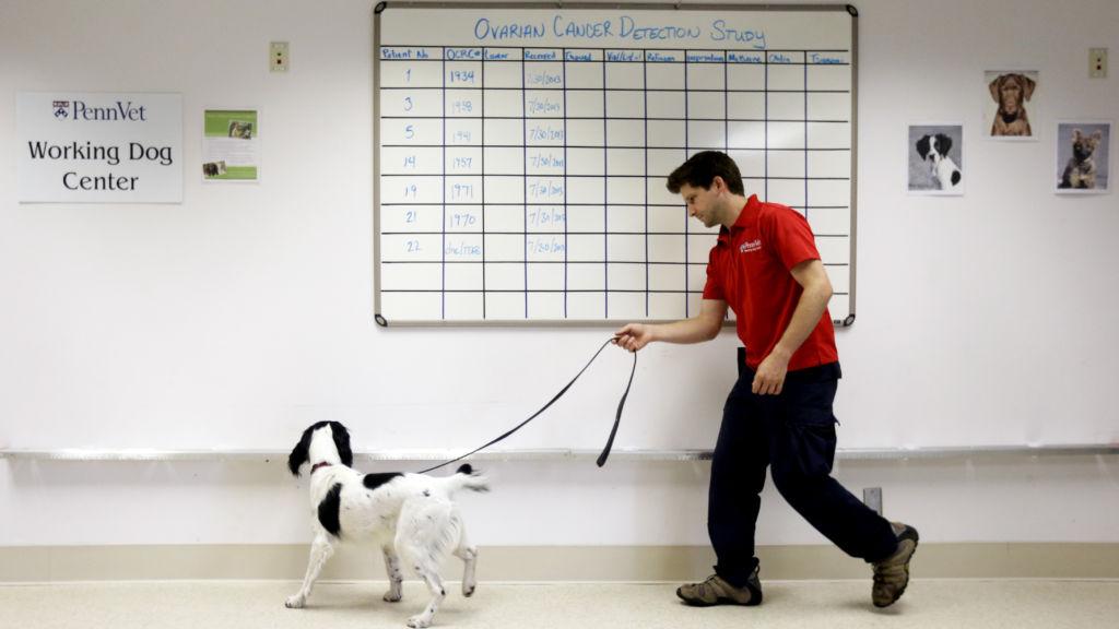 https://www.statnews.com/2016/04/29/dogs-sniff-disease/