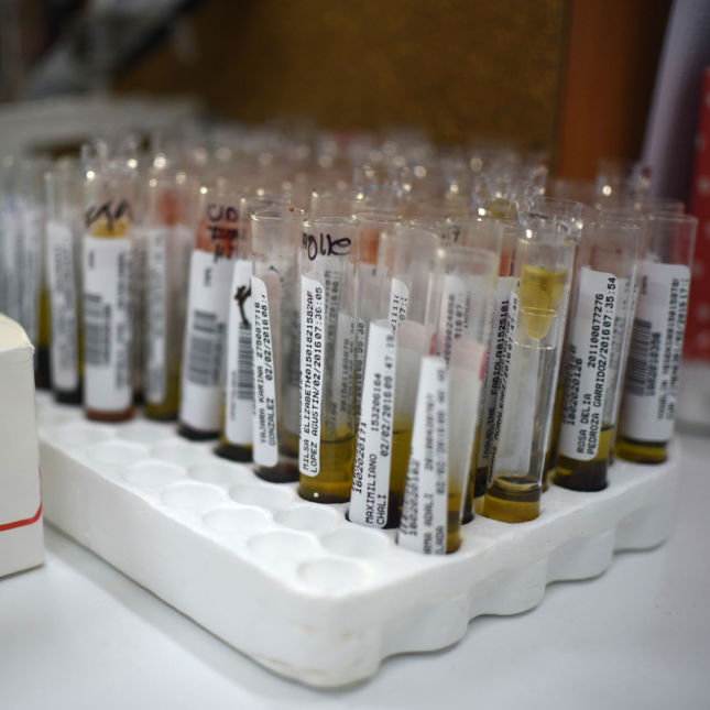 Zika blood samples