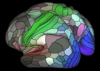 Mapping Human Cortex 2
