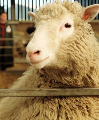 Dolly the sheep was birthed by cloning