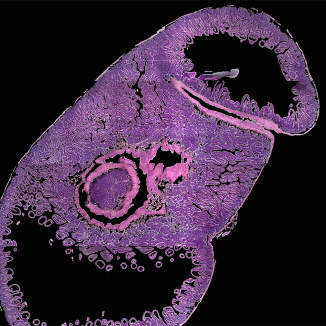 3scan mouse tissue