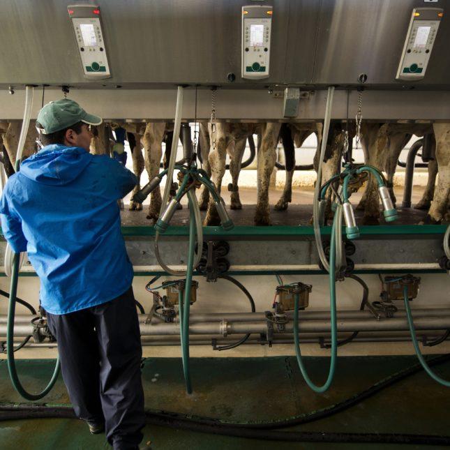Antibiotic Livestock