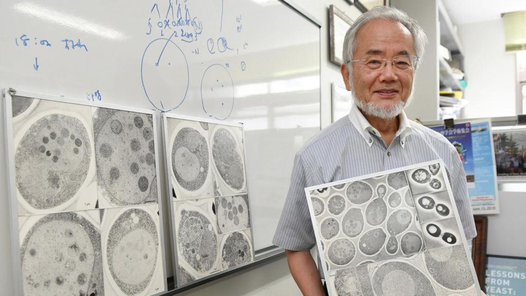 Japanese biologist wins Nobel for work on key cellular process