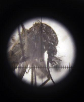 Zika threat over