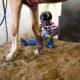Horse therapy - Haiti