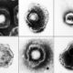 Herpes viruses