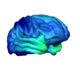 Teen Brains