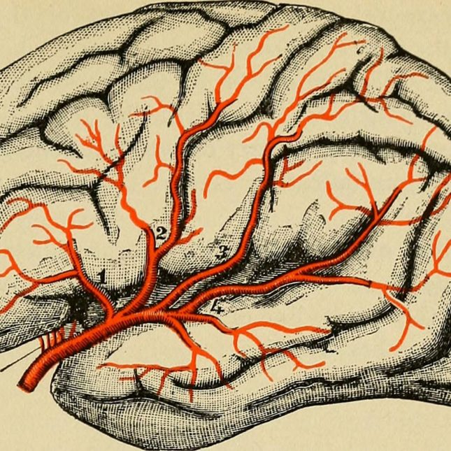 Brain and nerves