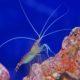 Shrimp Study