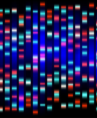 Crispr DNA