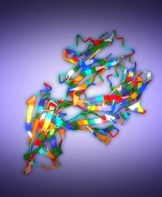 PD-L1 protein