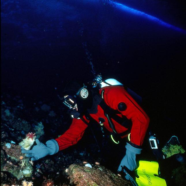 Antartica sea sponges