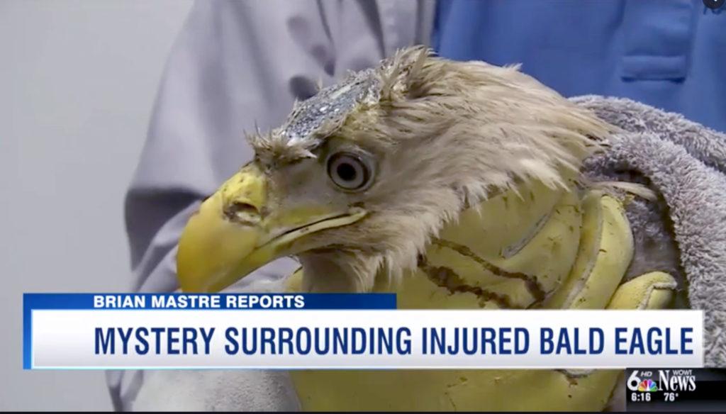 BOLT the eagle