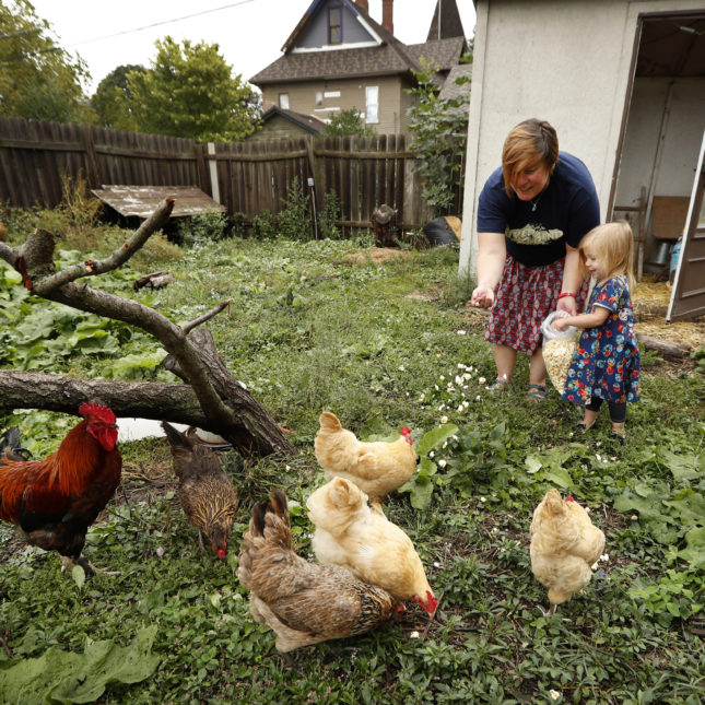 Tanya Keith And Her Daughter Iolana Feed Chickens In The Backyard Of Their  Home In Des Moines. Charlie Neibergall/AP