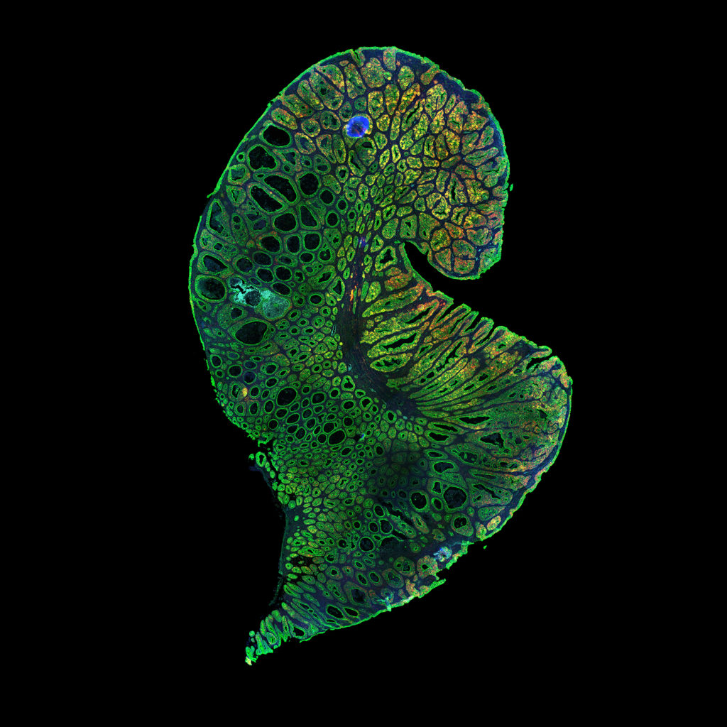 These scientific images are both research tools and works of art