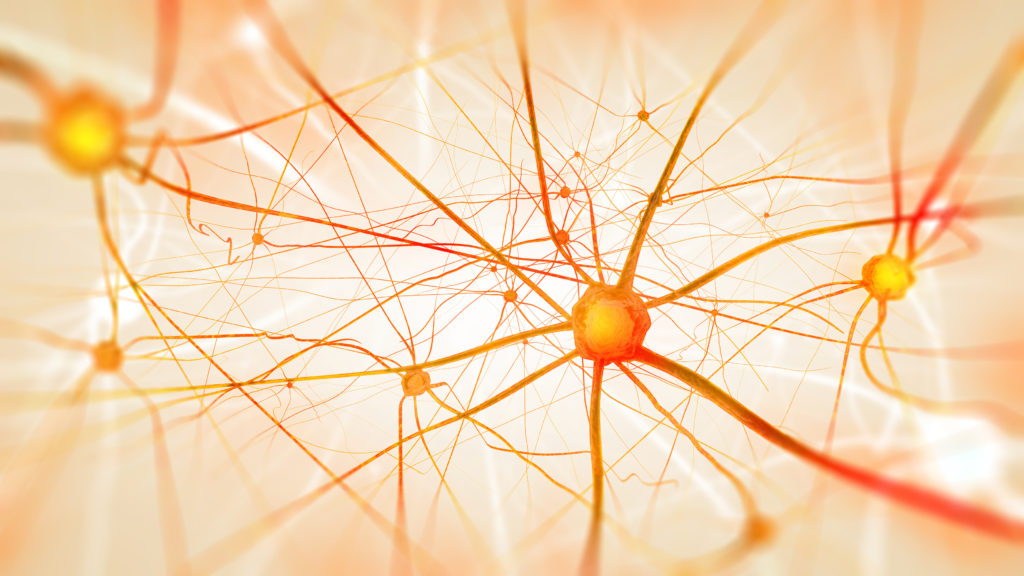 Adult brains do not make new neurons, controversial new study claims