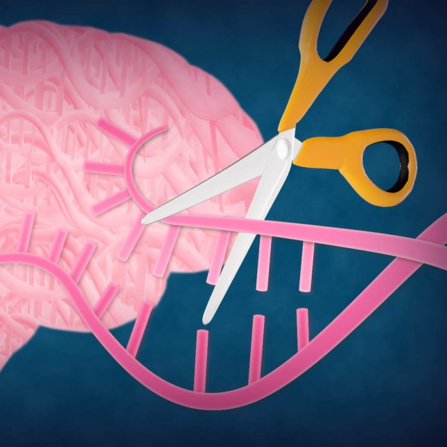 Crispr and the brain