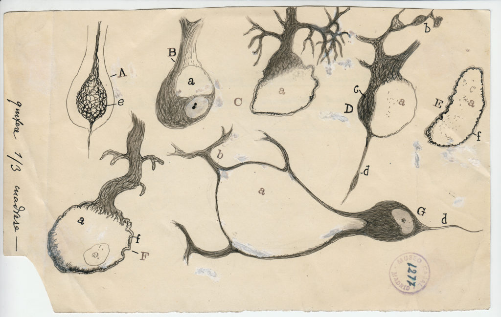 08 Cajal DRAWING
