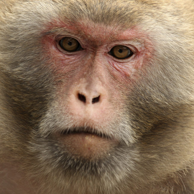 Researchers Identify New Autism Blood >> In Monkeys Researchers Find Possible Clue To Diagnosing Autism