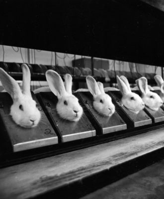 Row Of Rabbits
