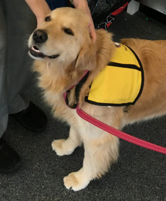 Therapy Dogs Superbug