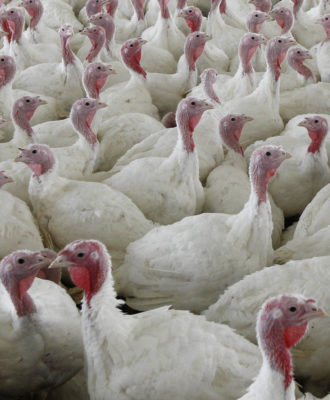 Turkey Salmonella Q And A