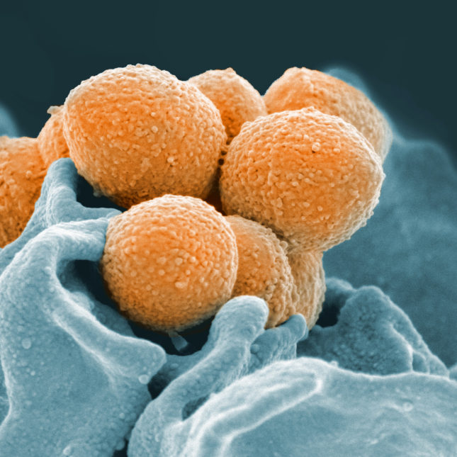 Neglected diseases such as group A streptococcus afflicts more than 1 billion people a year.