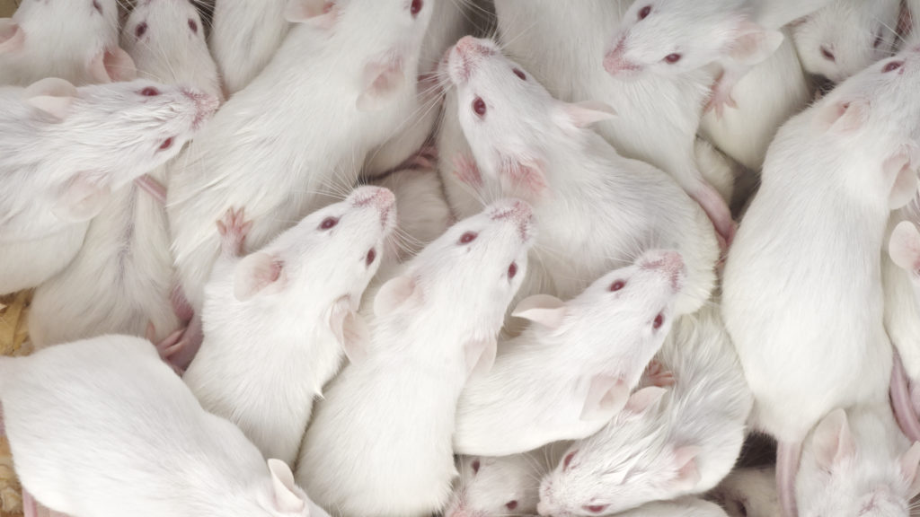 bcd79f93668 It's just in mice! This scientist is calling out hype in science reporting  - STAT