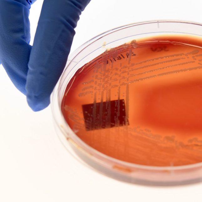 superbug Staphylcocus epidermidis