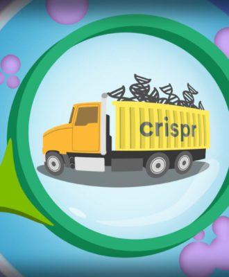 CRISPR delivery illustration
