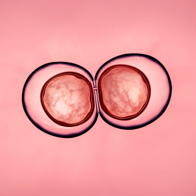 Embryonic cell division