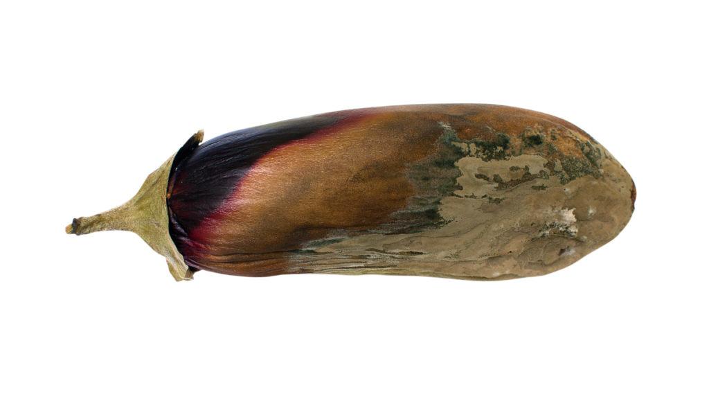 Rotten eggplant