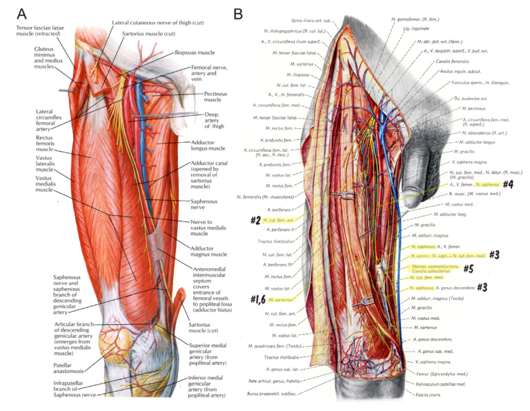 Anatomy text comparison