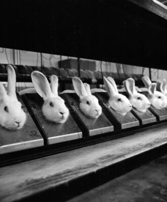 Animal testing - rabbits