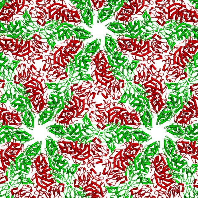 Protein Folding Pattern