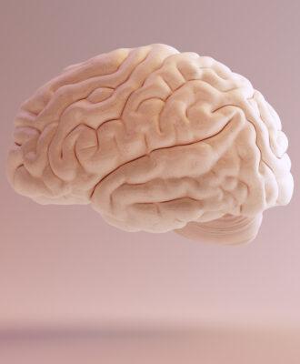 Pink brain psychology