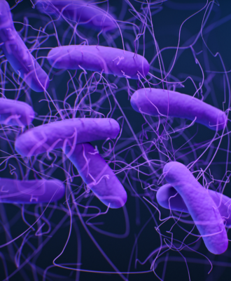 purple c. difficile