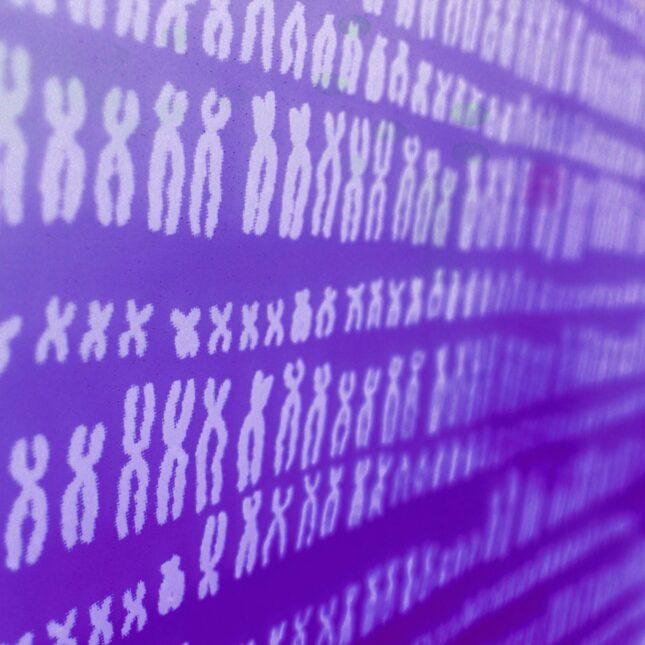 purple chromosomes