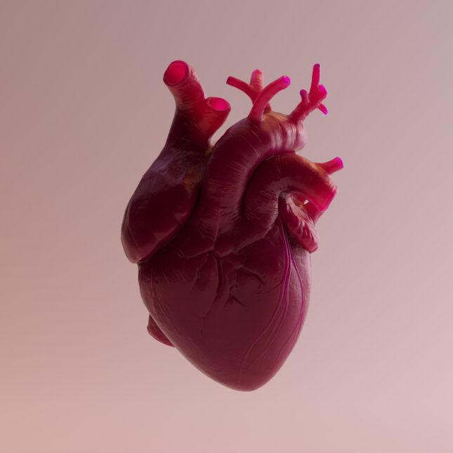 3d human heart illo