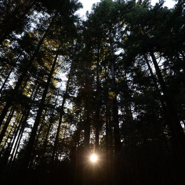 Vieil Armand forest nature bioterrorist