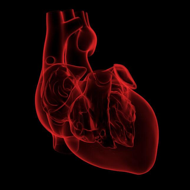 red heart illo