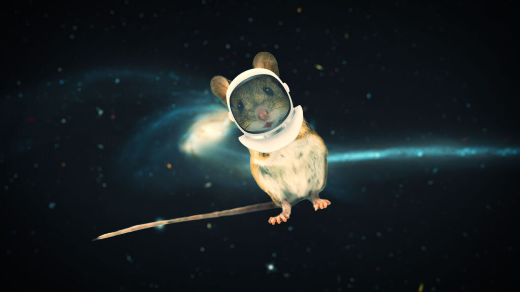 Scientists flew mouse sperm to space to study radiation's impact - STAT