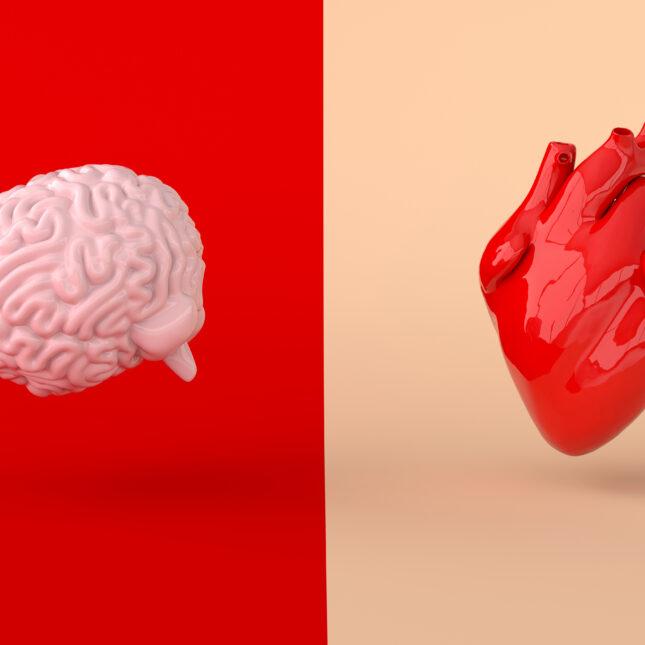 Heart and brain illo
